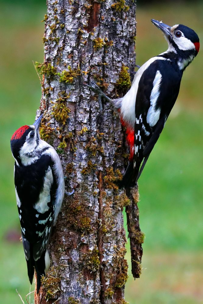 Meet the Woodpecker Family by Martin Lawrence Wildlife Photographer