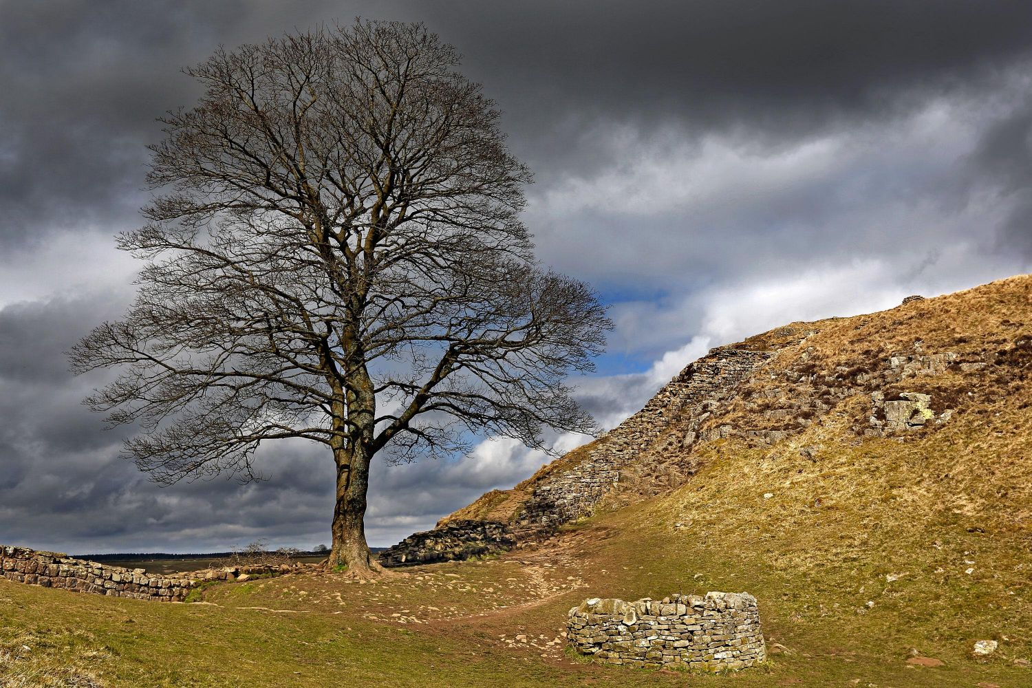 Sycamore Gap tree, near Milecastle 39 on Hadrian's Wall.