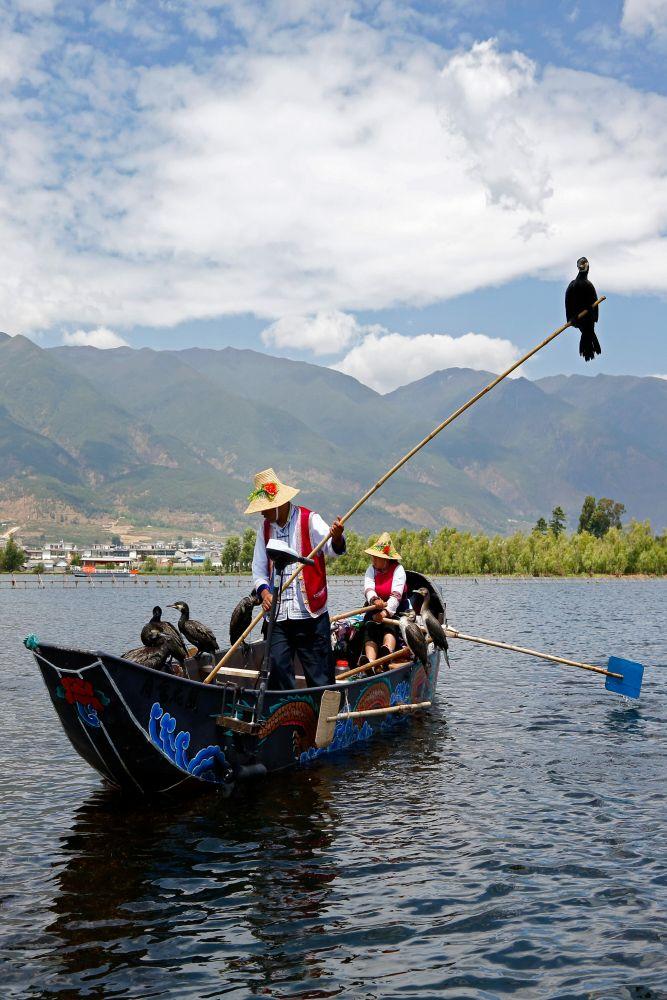 Cormorant Fishing at Dali China