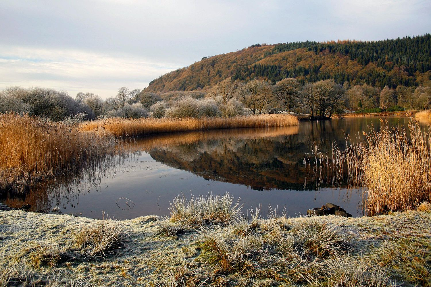 Frosty morning at Fell Foot Park, Windermere
