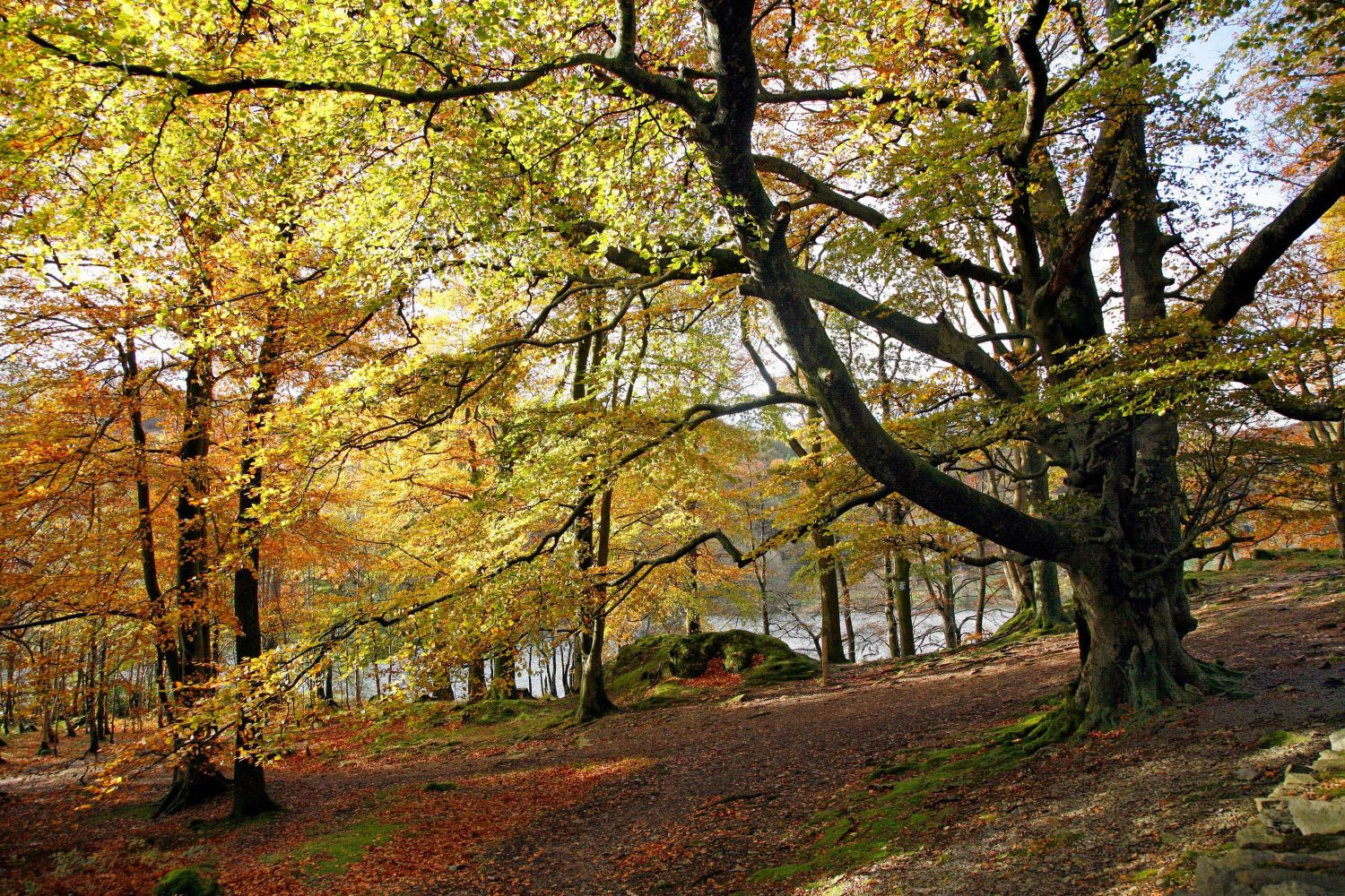 Beautiful lakeside golden foliage at Grasmere