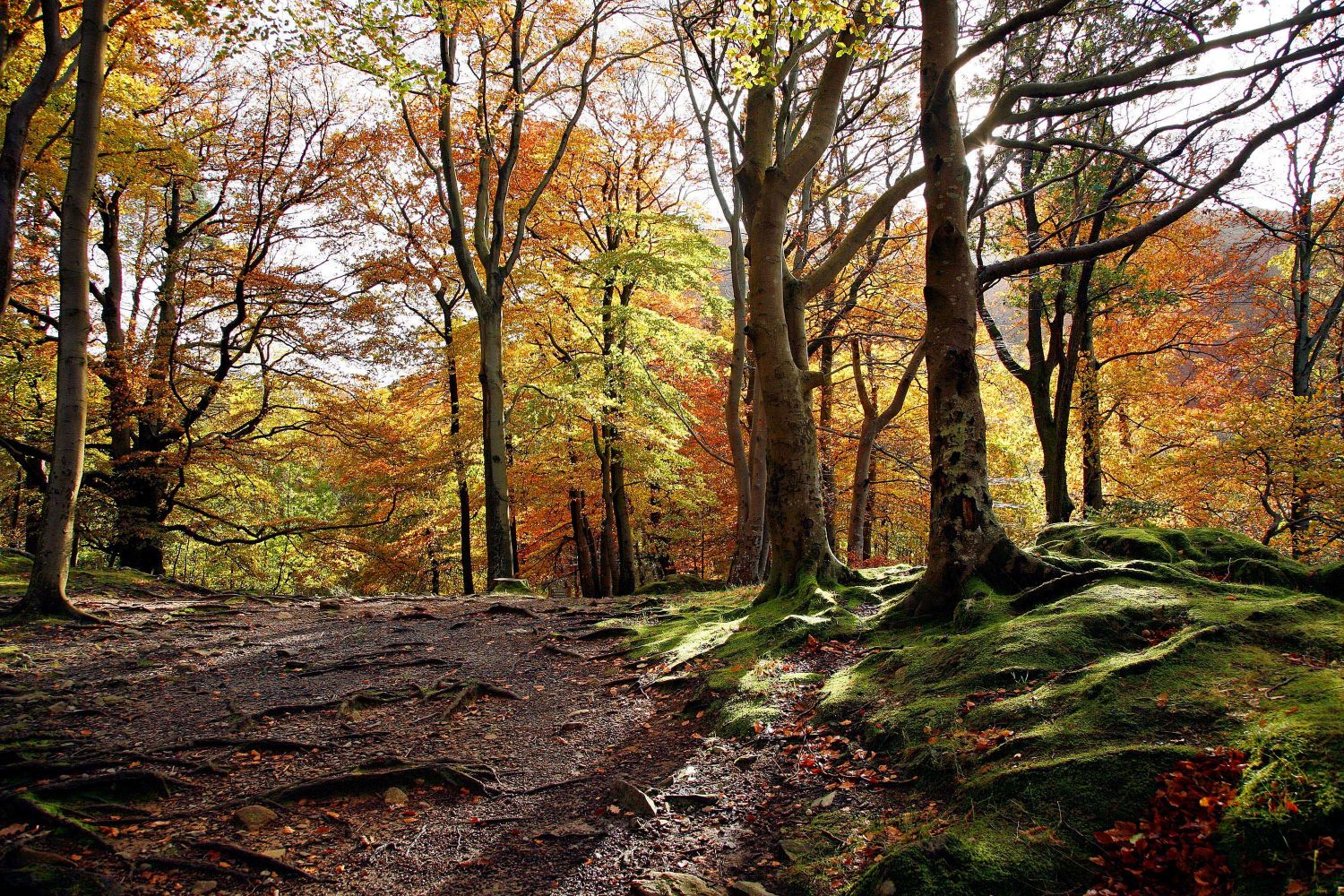 Breath-taking autumn colours at Penny Rock Woods, Grasmere.