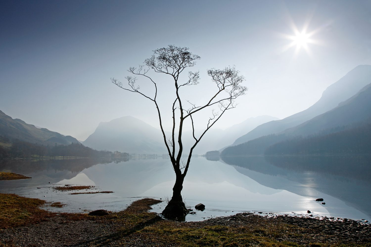 Morning Mist on Buttermere and the famous lone tree that stands on its northern shore