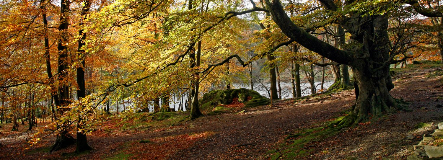 Autumn colours at Penny Rock Wood, Grasmere