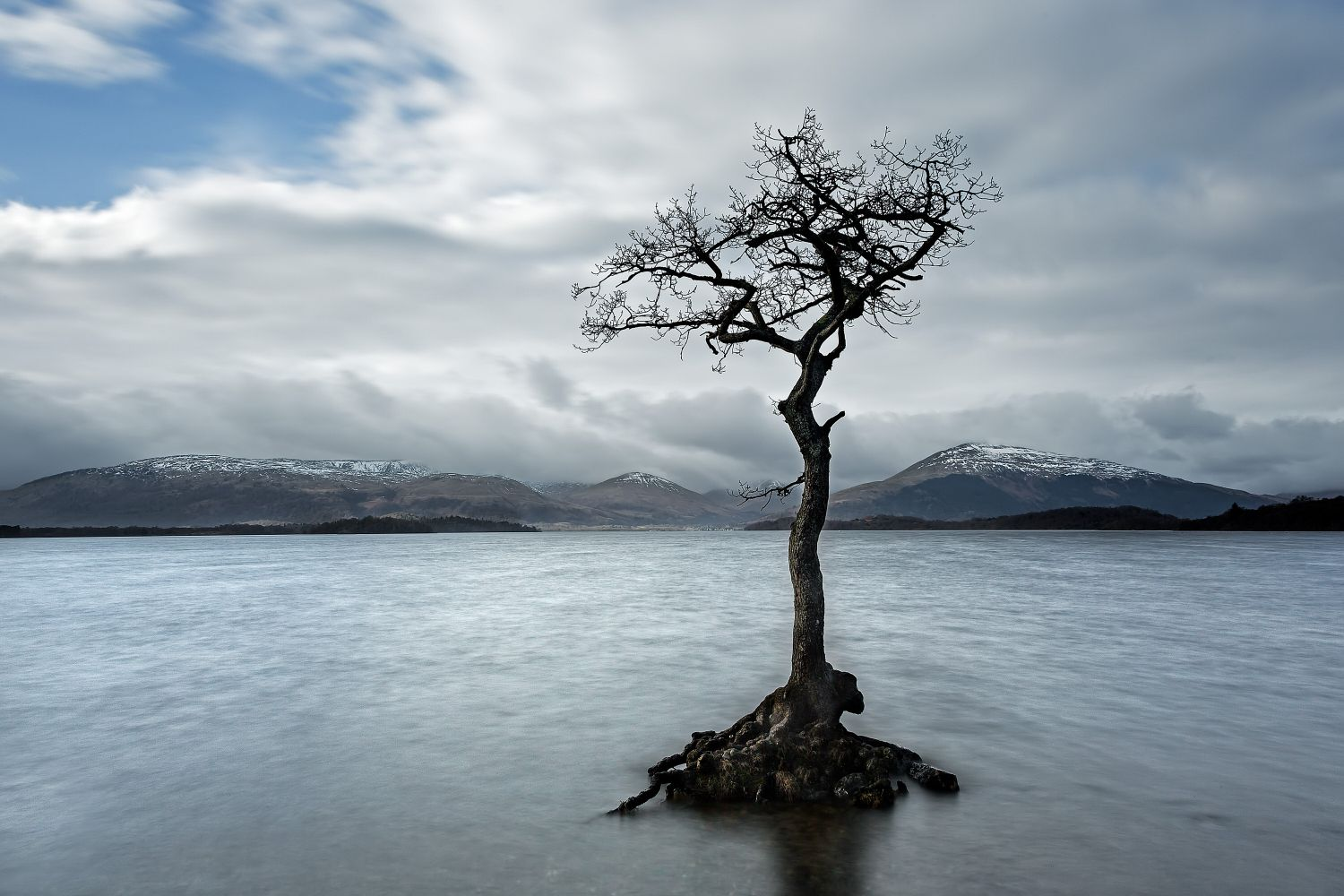 The lone tree at Milarrochy Bay, Loch Lomond