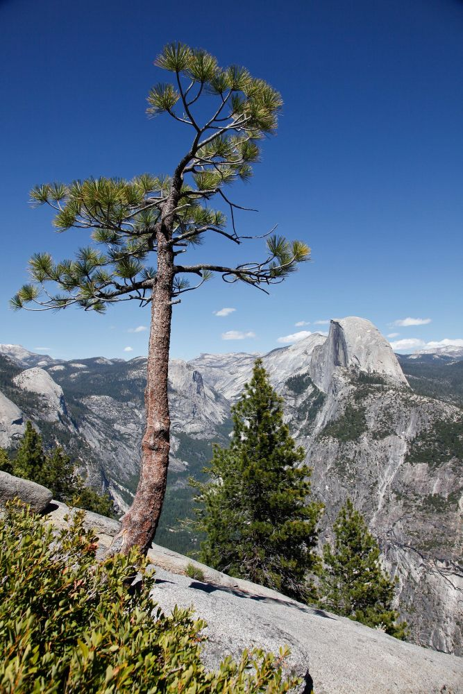 Half Dome from Washburn Point is a classic view of this Yosemite favourite.