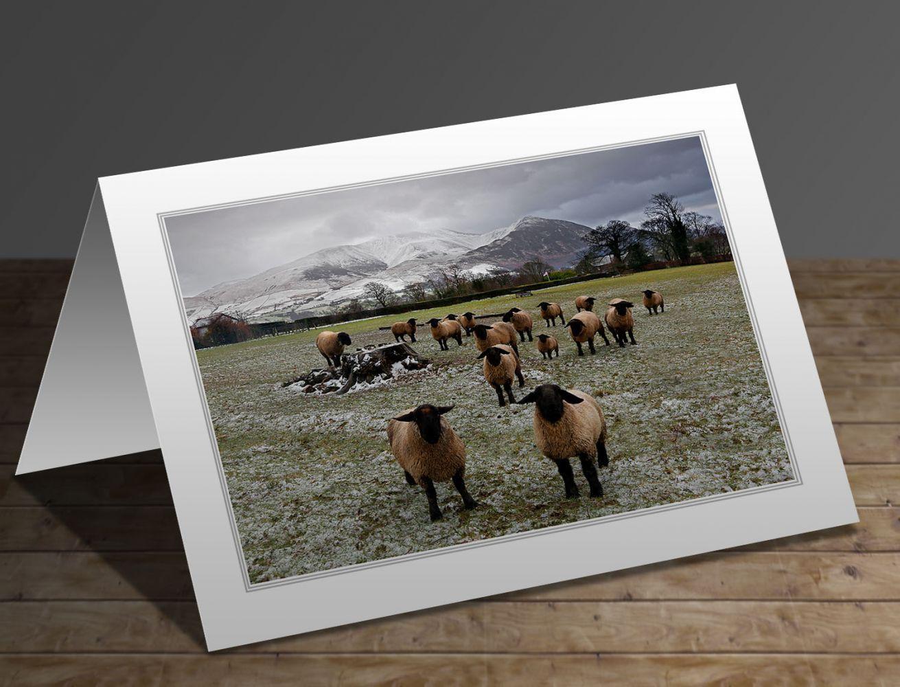 What ewe looking at Bassenthwaite Lake District greeting card